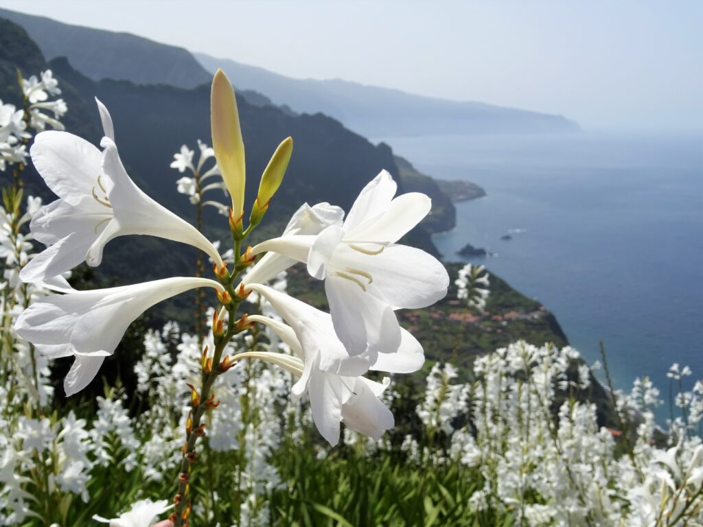 Spring in Madeira